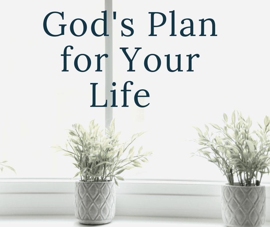 plants in window with text overlay God's plan for your life